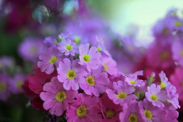 Photos: 春一番に3