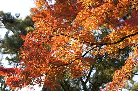 名古屋城紅葉