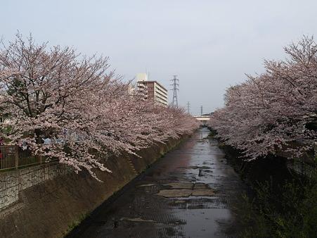 恩田川43