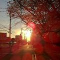 桜ライトアップ♪