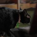 写真: 逃げる黒猫