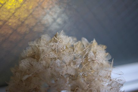 2010.10.22 机 窓辺に紫陽花