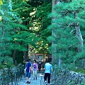Photos: 2011.09.18 長野県 駒ヶ根市 光前寺杉並木参道 光苔