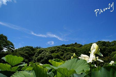 青と・・緑と・・白い花・・