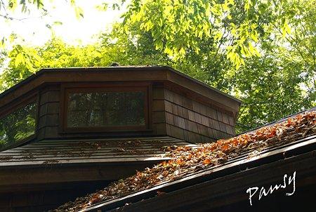 枯れ葉の積もる屋根・・