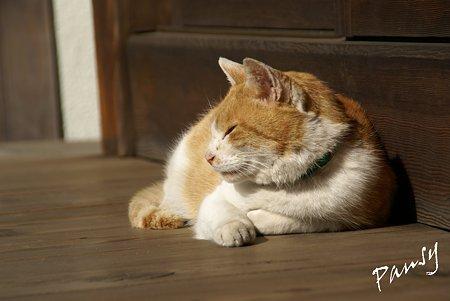 陽だまりの猫・・浄妙寺1