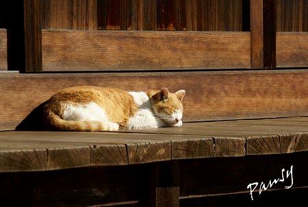 陽だまりの猫・・浄妙寺2