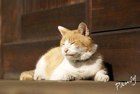 陽だまりの猫・・浄妙寺3