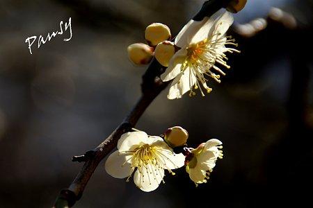 輝く花弁・・