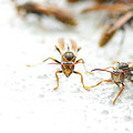 Photos: ハイキーで仕上げました、ハチ達