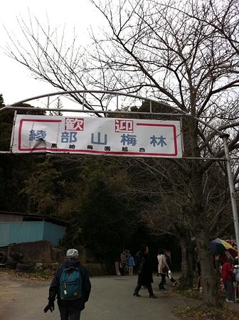 2011年綾部山梅林05