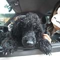 Photos: 君に幸あれ!!