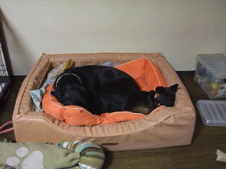 一つのベッドで一緒に寝てる~