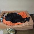 Photos: 一つのベッドで一緒に寝てる~
