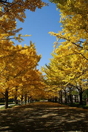 秋の青空!(101111)