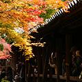 Photos: 黄葉を観る通天橋!(101123)