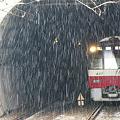 Photos: 雪降る横浜!(110211)