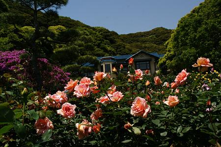 鎌倉文学館のバラ!(110514)