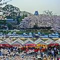 岡山城 桜