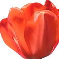 [Spring] 2011 お花 ※画像処理なし