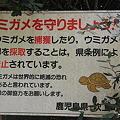 写真: 100516-102ウミガメを守りましょう!