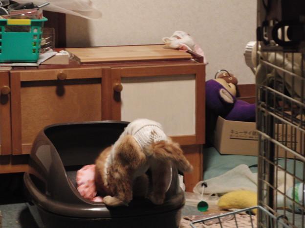 マガリー避妊手術当日