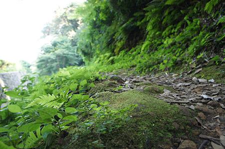 苔とか緑溢れる細道