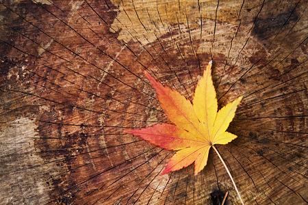 切り株模様と秋