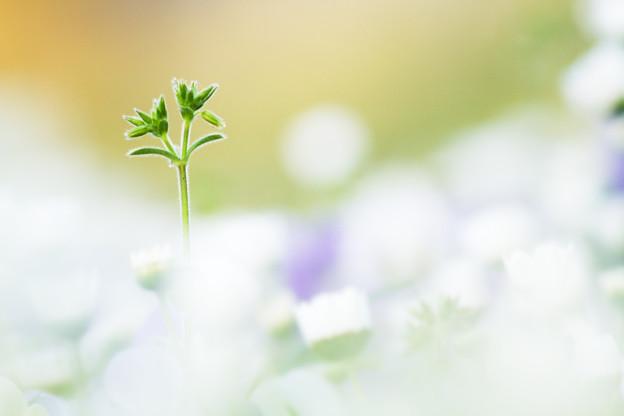 植物アンテナ