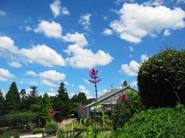 ハーブガーデンの夏の空~香木の森・邑南町~