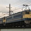 写真: pf1041-20090220