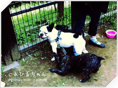 写真: 20110523_07