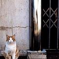 Photos: マネキン猫