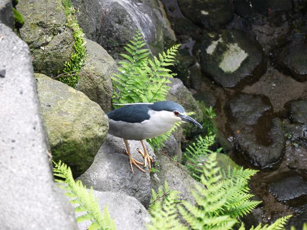 鳥in島原