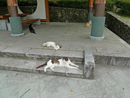 猫の楽園~天拝山歴史自然公園