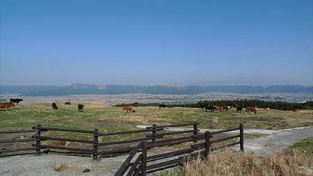 阿蘇の放牧風景(5)阿蘇市と外輪山を見ながら