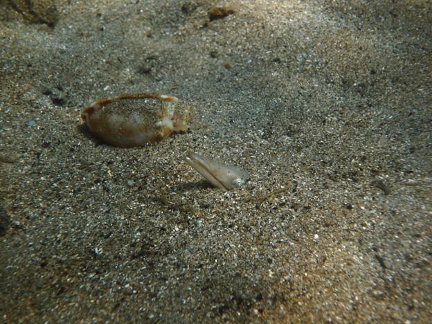 砂の中のクリーチャー
