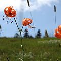 Photos: IMG_8030