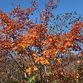 Photos: IMG_8921那須 茶臼岳 姥ヶ平の紅葉