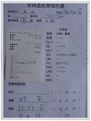 20120617 尿検査 結果