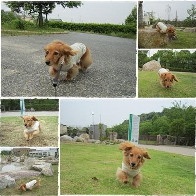 20110605 お散歩1