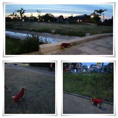 20110713 お散歩