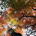 写真: 鶴仙渓 紅葉(4)