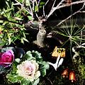 Photos: 寄せ植え 松竹梅の盆栽と葉牡丹