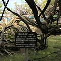 Photos: 巨樹の藤の根元  小松城跡公園(芦城公園)