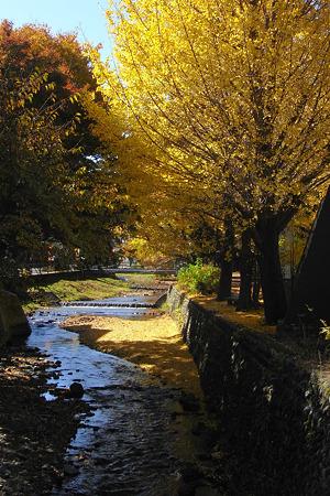 黄金降る川
