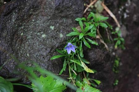 利尻岳-20100814-074902