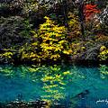 Photos: 五色沼に映って。。