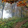 雨降る山道