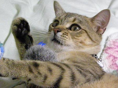 圭佑、やっぱり猫だね